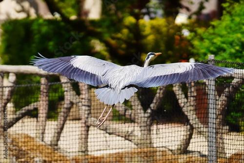 Naklejka premium Antwerp zoo Antwerpen park