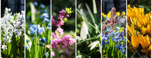 Photo Collage Of Primroses. Different Beautiful Spring Flowers On A Sunny Day.