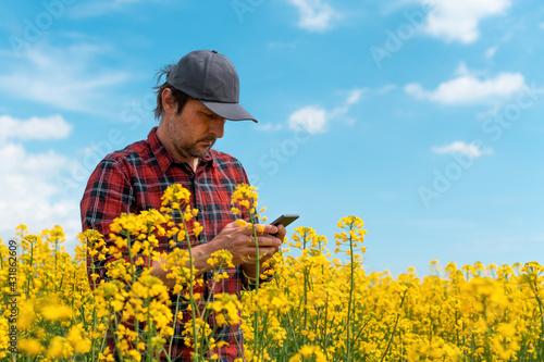 Fototapeta Farmer using mobile smart phone app in blooming rapeseed field obraz