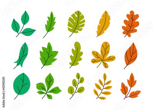 Fototapeta Vector leaves set