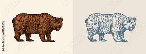 Canvas Print Grizzly bear in vintage style