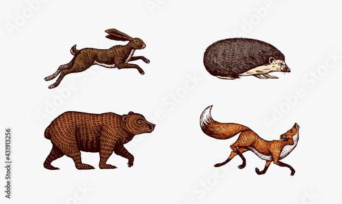 Valokuva Forest animals
