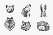 Forest Animals. Bear Grizzly, Wolf And Red Fox, Hare And Hedgehog And Seal. The Face Of The Beasts. Close Up. Vector Engraved Hand Drawn Vintage Sketch For Label Or Poster.
