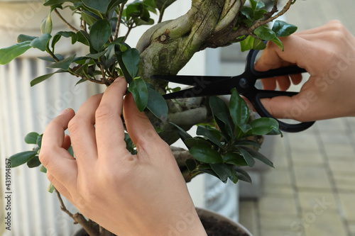 Woman cutting beautiful Bonsai tree outdoors, closeup