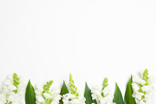 White Snapdragon Flowers On White Background. Flat Lay, Top View, Copy Space