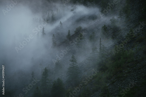 Fototapeta Minimal mountain scenery with low clouds among coniferous trees on steep slope
