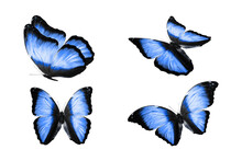 A Set Of Colored Butterflies Is Isolated On A White Background. Tropical Moths. Flying Insects