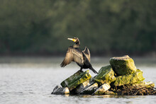 Cormorant Standing On Island Of Stones In Middle Of Lake Drying Wings Out In Warm Golden Sunshine Light.