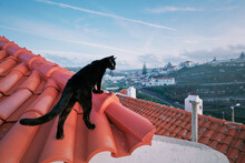 Black Cat On Red Tiled Roof.