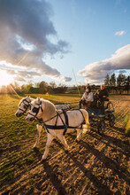 Ranchers Sitting Behind In Carriage While Training Horse On Ranch