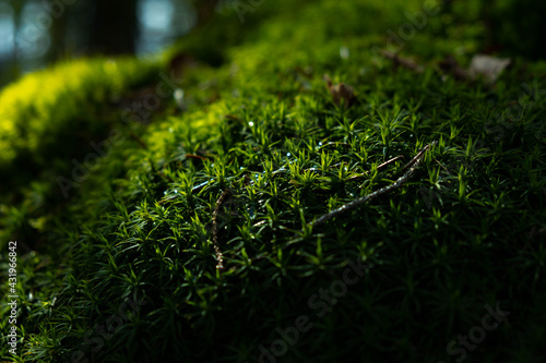 green moss on the ground - fototapety na wymiar