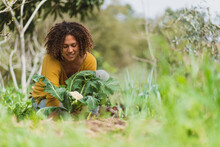 Smiling Curly Haired Woman Picking Cauliflower In Garden