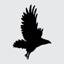Eagle Silhouette, Eagle Isolated On White Background