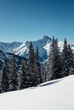 Snow Covered Mountains And Pine Trees Against Clear Blue Sky, Lechtal Alps, Tyrol, Austria