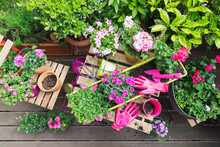 Potted Flowers On Balcony