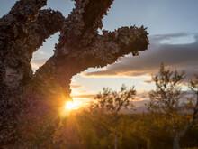 Lichen On Branch Of Birch Tree In Forest At Sweden