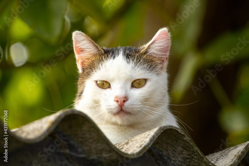 Naklejka premium White spotted cat on the roof of the house among the green vegetation