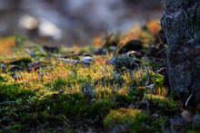 Close Up Lichens And Moss In Forest