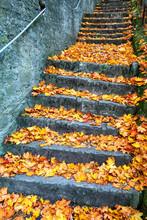 Germany, Bavaria, Wurzburg, Stone Steps Covered In Fallen Autumn Leaves