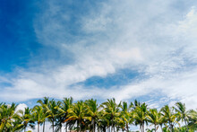 Palm Trees Against White Clouds
