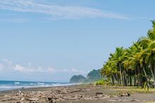 Costa Rica, Jaco, Palm Trees Along Sandy Beach