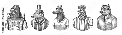 Gorilla monkey astronaut. Pig hairdresser or vitorian gentleman. Horse polo player. Rooster tennis player. Tiger doctor in a suit. Engraved monochrome old illustration. Hand drawn sketch. - fototapety na wymiar