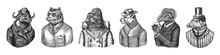 Gorilla Monkey Astronaut. Sheep Drinks Beer. Cheetah In Coat. Buffalo Bull In Hat Tiger Doctor In A Suit. Pig Hairdresser Or Vitorian Gentleman. Fashion Animal Character. Hand Drawn Sketch.