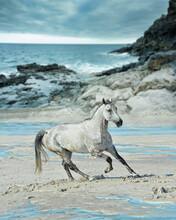 White Horse Gallops On The Beach