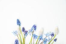 Muscari Grape Hyacinth Flat Lay With Blank Copy Space