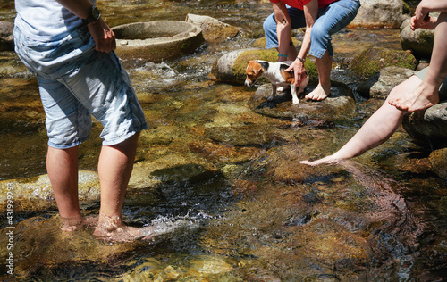 Fotografía Group of people with dog standing in forest river or cooling their bare feet, de