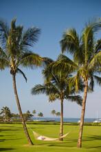 A Hammock Between Three Palm Trees At A Hotel Resort On Kauai, Hawaii.