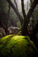 Painted Cave Creek, Santa Ynez Mountains