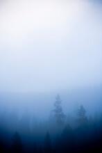 Morning Fog Over Trees In The Upper Green