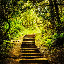 Wooden Steps In The Trail On The Way To Pantoll Station In Mt. Tamalpais State Park.