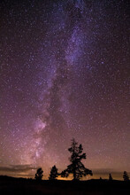 The Milky Way Galaxy Extends Out From A Small Cluster Of Trees In The Bighorn Mountains Of Wyoming.