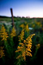 The Bottomlands Of Tallgrass Prairie National Preserve, Kansas, Where The Grass Grows The Tallest.