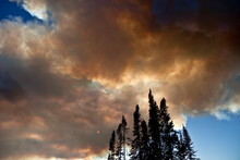 Smoke From Wildfires Covering The Sun With Lodgepole Pines In The Foreground