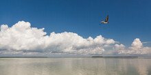 A Brown Pelican Flies Out Over Florida Bay Within Everglades National Park, Florida.
