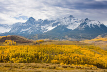 Landscape Of Autumn Leaves Changing Colors Against The San Juan Mountains Near Telluride, CO