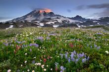 Sunrise At Mount Rainier, Mount Rainier National Park, Washington.