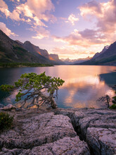 A Lone Trees Struggles To Eke Out A Hardy Existence Along The Rocky And Often Wind Scoured Shore Of Glacier National Park's Saint Mary's Lake.