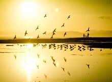 Birds Fly As The Sun Begins To Set Along The California Coast.