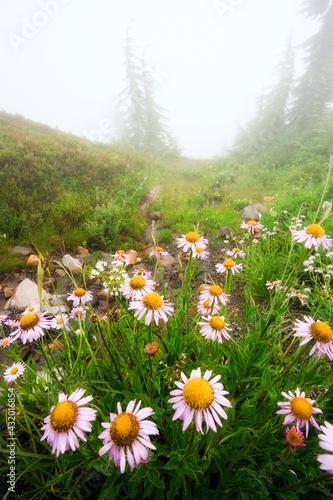 Paradise Park, Cascade Range, Mount Rainier National Park Wall mural