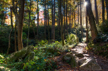 Smoky Mountain National Park: The Sun Shines Through The Forest Lighting Up The Appalachian Trail Near Clingman's Dome