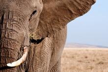 An Elephant Portrait.