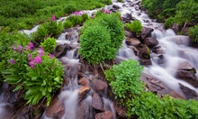 A Mountain Stream Flows Out Of A Remote Lake Within The Indian Peaks Wilderness Area Near Rocky Mountain National Park In Colorado.