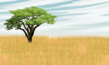 African Savannah. Lonely African Acacia Tree In Tall Dry Grass. Realistic Vector Landscape