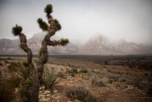 A Spring Storm Looms Over Calico Canyon In Red Rock Conservation Area - Las Vegas, Nevada