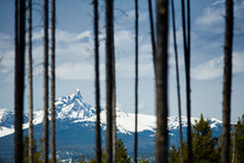 Pine Trees Framing A Vista Of The Sisters Volcano In Oregon