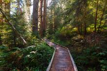Gothic Basin Trail, North Cascades National Park, Washington State, USA